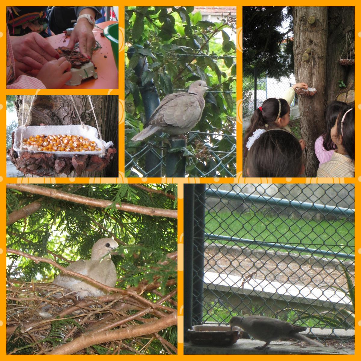 As aves que nos rodeiam